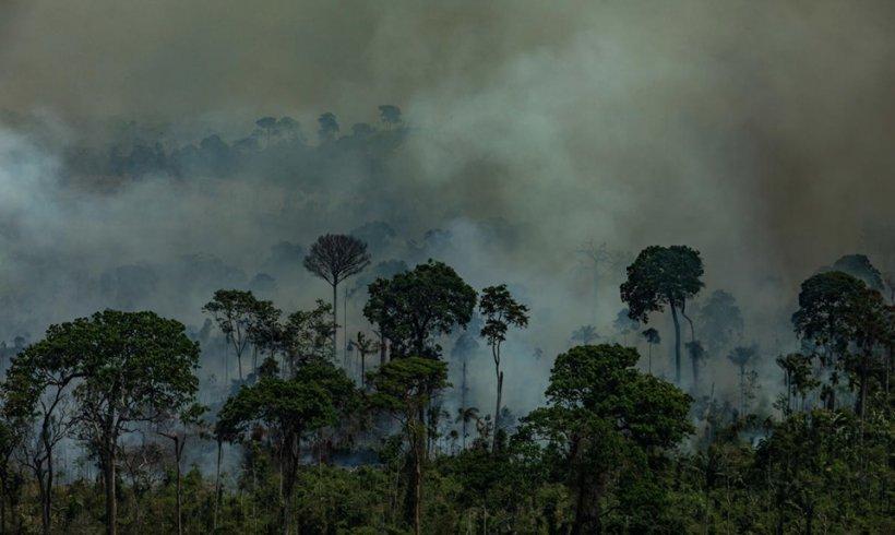 ¿Qué se quema en la Amazonía?